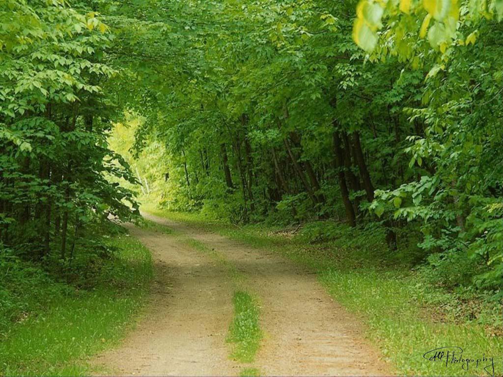 اجمل مناظر طبيعية فى العالم 2019 صور مناظر طبيعيه خضراء hd خلفيات خلابة جميلة جداً 2020 للفيس بوك green-nature.jpg