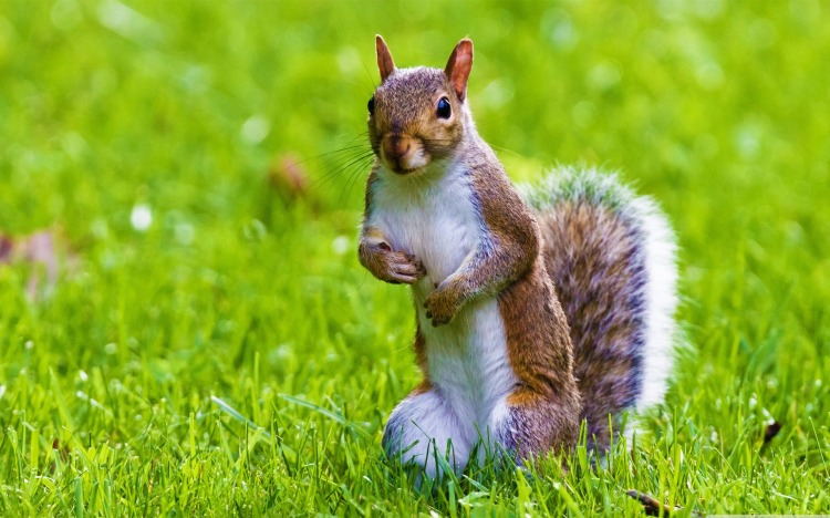Wildlife : Cute Squirrel