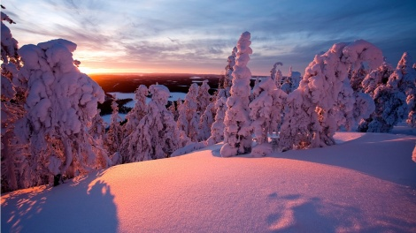 Heavenly Snow: Winter Landscape