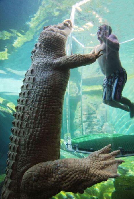 A visitor to the Crocosaurus Cove park in Darwin eyeballs Crocodile Dundee's, Burt