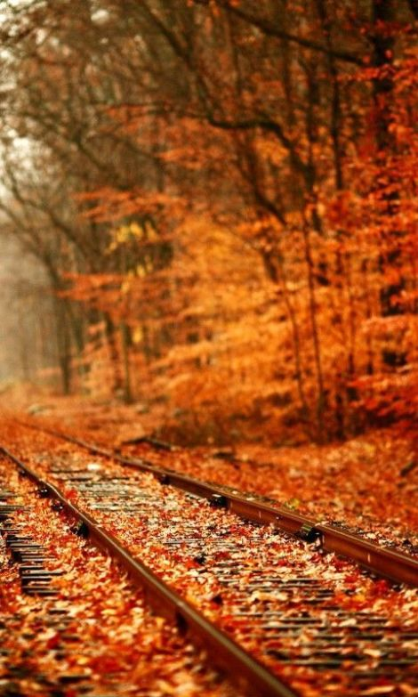 Photo of the day: Railroads in Autumn