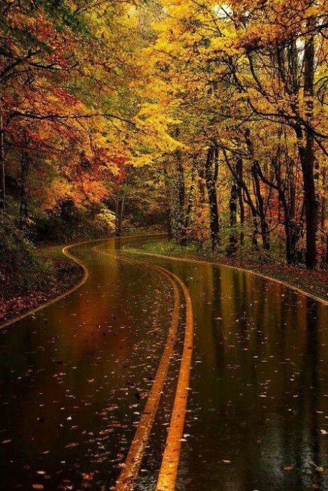 Road after rain in Autumn