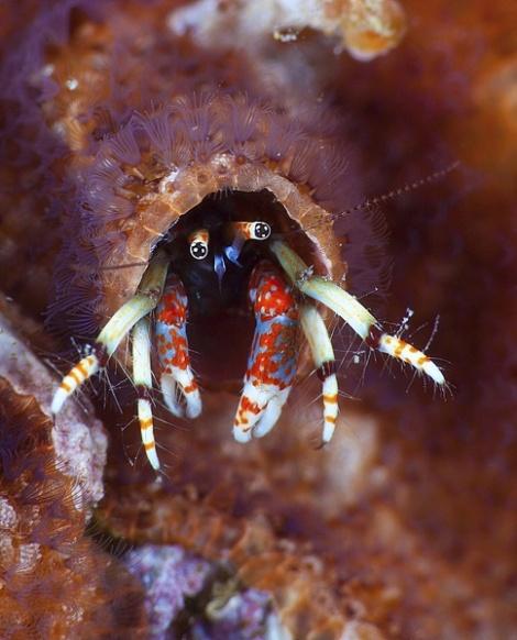 Photogenic Crab